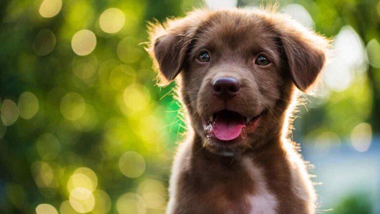 ¿Cómo hacer una experiencias positiva a un cachorro?