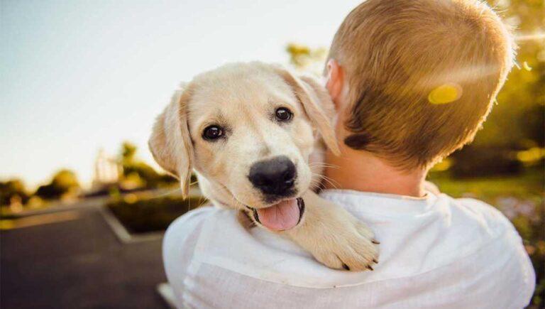 ¿Cómo saber si tu perro es feliz?
