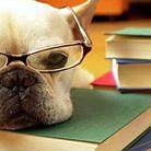 Formación práctica de adiestramiento y manejo de perros