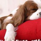 Reducción de estrés y ansiedad de perros