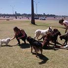 Socialización grupal de perros